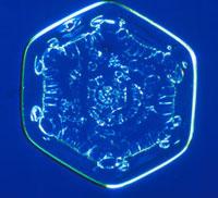 雪の結晶 23018002590| 写真素材・ストックフォト・画像・イラスト素材|アマナイメージズ