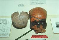 ニア洞窟の約4万年前の頭蓋骨