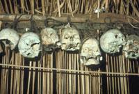 人骨(頭) 23018002602| 写真素材・ストックフォト・画像・イラスト素材|アマナイメージズ
