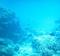 海底 23018002715| 写真素材・ストックフォト・画像・イラスト素材|アマナイメージズ