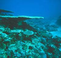 海底 23018002716| 写真素材・ストックフォト・画像・イラスト素材|アマナイメージズ