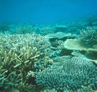 海底 23018002717| 写真素材・ストックフォト・画像・イラスト素材|アマナイメージズ