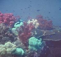 海底 23018002718| 写真素材・ストックフォト・画像・イラスト素材|アマナイメージズ