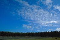 巻積雲 23018002789| 写真素材・ストックフォト・画像・イラスト素材|アマナイメージズ