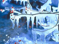 氷柱(木についた) 23018002829| 写真素材・ストックフォト・画像・イラスト素材|アマナイメージズ