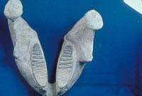 ナウマン象(下顎)