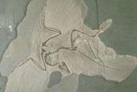 始祖鳥 23018002955| 写真素材・ストックフォト・画像・イラスト素材|アマナイメージズ