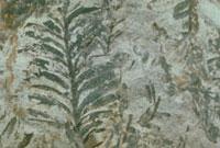 メタセコイア 23018002962| 写真素材・ストックフォト・画像・イラスト素材|アマナイメージズ
