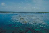 サンゴ礁 23018003165| 写真素材・ストックフォト・画像・イラスト素材|アマナイメージズ