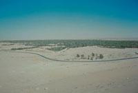 シリア砂漠のオアシス