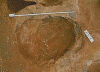 ステゴドン象の足跡化石