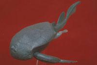 ボトリオレピス 23018003245| 写真素材・ストックフォト・画像・イラスト素材|アマナイメージズ