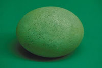 モア(卵) 23018003259| 写真素材・ストックフォト・画像・イラスト素材|アマナイメージズ