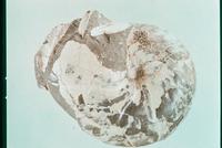 ダメシテス 23018003268| 写真素材・ストックフォト・画像・イラスト素材|アマナイメージズ