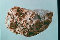 コウモリの一種 23018003270| 写真素材・ストックフォト・画像・イラスト素材|アマナイメージズ