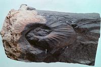 ホランディテス 23018003309| 写真素材・ストックフォト・画像・イラスト素材|アマナイメージズ