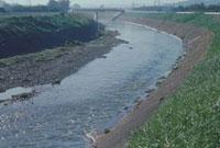 川の中水位