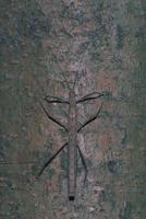 トゲナナフシ 23018003777| 写真素材・ストックフォト・画像・イラスト素材|アマナイメージズ