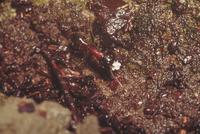 ムネアカオオアリ 23018011355| 写真素材・ストックフォト・画像・イラスト素材|アマナイメージズ