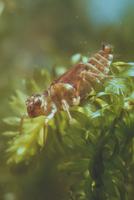 シオカラトンボ 23018013801| 写真素材・ストックフォト・画像・イラスト素材|アマナイメージズ