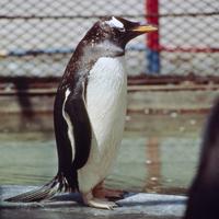 オンジュンペンギン