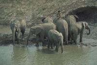 アフリカゾウ 23018028548| 写真素材・ストックフォト・画像・イラスト素材|アマナイメージズ
