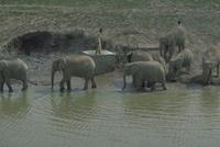 アフリカゾウ 23018028558| 写真素材・ストックフォト・画像・イラスト素材|アマナイメージズ