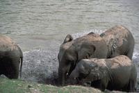 アフリカゾウ 23018028561| 写真素材・ストックフォト・画像・イラスト素材|アマナイメージズ