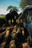 アジアゾウ(インドゾウ) 23018028593| 写真素材・ストックフォト・画像・イラスト素材|アマナイメージズ