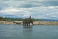アジアゾウ(インドゾウ) 23018028598| 写真素材・ストックフォト・画像・イラスト素材|アマナイメージズ