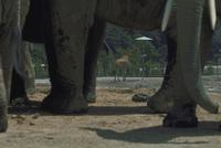 キリンとアフリカゾウ 23018029178| 写真素材・ストックフォト・画像・イラスト素材|アマナイメージズ
