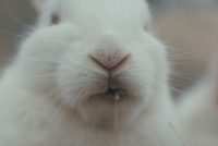 ウサギ 23018029186| 写真素材・ストックフォト・画像・イラスト素材|アマナイメージズ