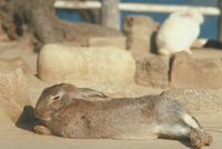 ウサギ 23018029189| 写真素材・ストックフォト・画像・イラスト素材|アマナイメージズ
