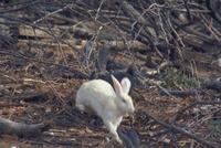 ウサギ 23018029195| 写真素材・ストックフォト・画像・イラスト素材|アマナイメージズ