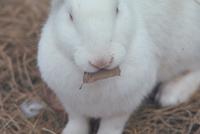ウサギ 23018029210| 写真素材・ストックフォト・画像・イラスト素材|アマナイメージズ