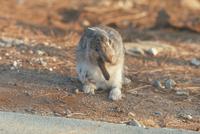 ウサギ 23018029215| 写真素材・ストックフォト・画像・イラスト素材|アマナイメージズ