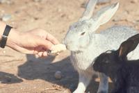 ウサギ 23018029224| 写真素材・ストックフォト・画像・イラスト素材|アマナイメージズ
