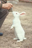ウサギ 23018029225| 写真素材・ストックフォト・画像・イラスト素材|アマナイメージズ