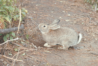 ウサギ 23018029227| 写真素材・ストックフォト・画像・イラスト素材|アマナイメージズ