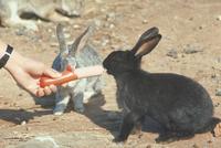 ウサギ 23018029229| 写真素材・ストックフォト・画像・イラスト素材|アマナイメージズ