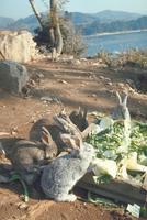 ウサギ 23018029233| 写真素材・ストックフォト・画像・イラスト素材|アマナイメージズ