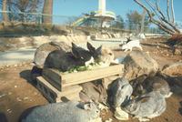 ウサギ 23018029235| 写真素材・ストックフォト・画像・イラスト素材|アマナイメージズ