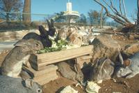ウサギ 23018029237| 写真素材・ストックフォト・画像・イラスト素材|アマナイメージズ