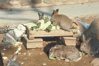 ウサギ 23018029239| 写真素材・ストックフォト・画像・イラスト素材|アマナイメージズ