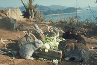 ウサギ 23018029248| 写真素材・ストックフォト・画像・イラスト素材|アマナイメージズ