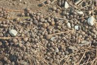 ウサギのふん 23018029249| 写真素材・ストックフォト・画像・イラスト素材|アマナイメージズ