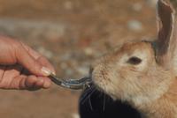 ウサギ 23018029252| 写真素材・ストックフォト・画像・イラスト素材|アマナイメージズ