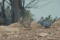 ウサギ 23018029257| 写真素材・ストックフォト・画像・イラスト素材|アマナイメージズ