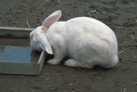 ウサギ 23018029741| 写真素材・ストックフォト・画像・イラスト素材|アマナイメージズ