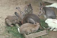 ウサギ 23018029859| 写真素材・ストックフォト・画像・イラスト素材|アマナイメージズ
